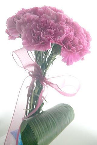ポット付きカーネーションの花束~kindly
