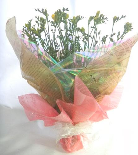 フリージアのお誕生日祝いの花束