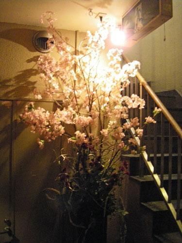 桜のディスプレイ