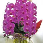 胡蝶蘭の鉢植えギフト