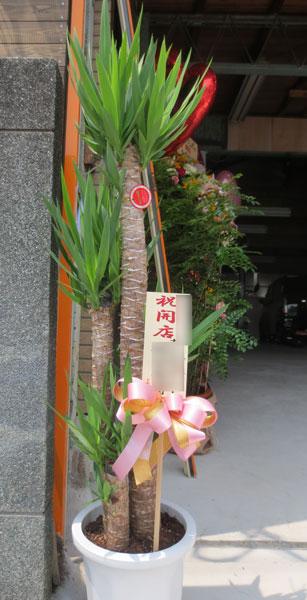 コンシンネの鉢植えギフト