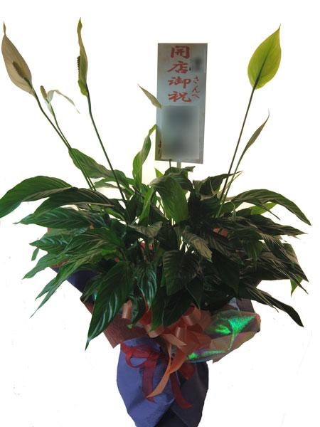 開店祝いの鉢植えギフト
