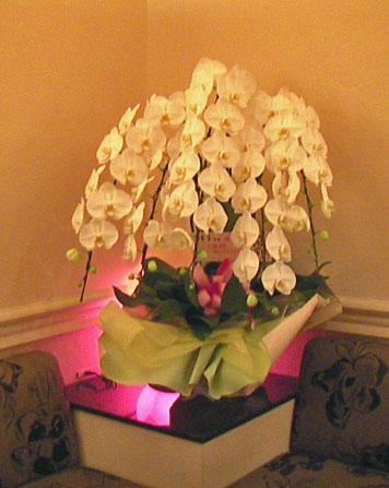お誕生日祝いの鉢植えギフト