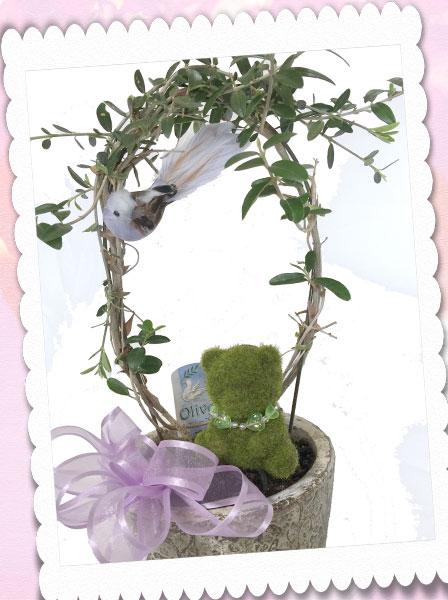 オリーブと、青い小鳥と、モスベアーの鉢植えギフト