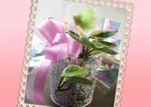 サクラランの鉢植えギフト