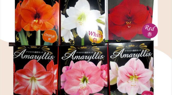 アマリリスの球根栽培セット