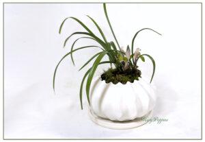 春蘭の鉢植えギフト